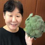 今が旬のブロッコリー。栄養価も高く、効能効果も素晴らしい。